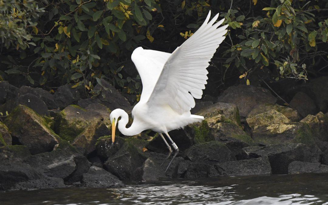 Update fauna-wetenswaardigheden – 27 oktober 2020