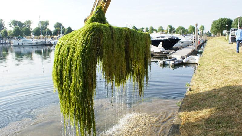 Waterplanten informatie, juli 2021